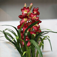 Hot 100Pcs Chinese Cymbidium Orchid Indoor Potted Orchid Flowers Plant Seeds