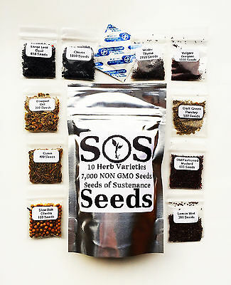 7,000 Herb Seeds 10 Varieties Parsley Cumin Chives Mustard Cilantro Basil Thyme