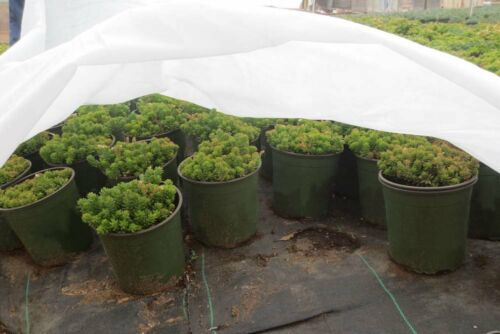 0.55oz Floating Row Crop Cover//Frost Blanket //Garden Fabric Plant Cover 7*50FT