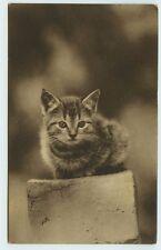 Cat Postcard~Photo of Cute Little Kitten~c1914