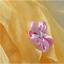 Girls-Beauty-and-the-Beast-Dress-kids-Princess-Belle-Dress-UP-Set-Size-1-8y thumbnail 3