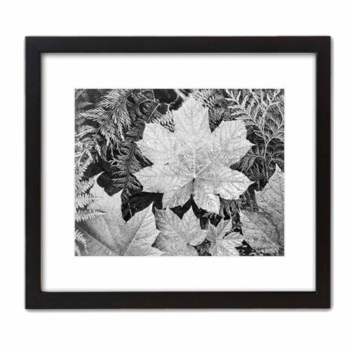 Historic Art Photo ANSEL ADAMS: LEAVES Famous Black & White Photograph NATURE