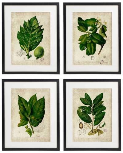 Vintage Botanical Floral No 05 Art Home Wall Art Print Set of 4 Prints UNFRAMED