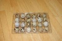 Clear Quail Egg Cartons 100 Pack Flat Top 24 Egg