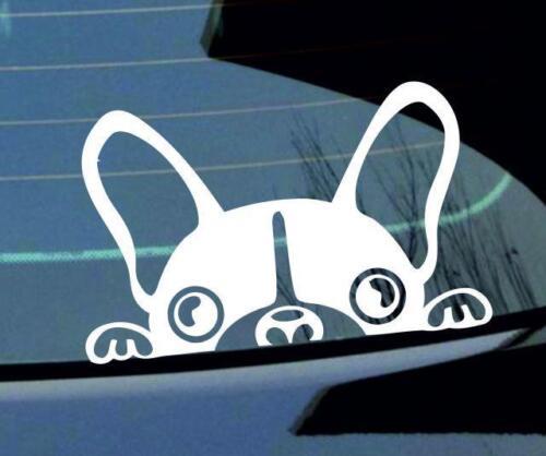 peeking PUG Car Window JDM Bumper Vinyl Decal Sticker JDM VW