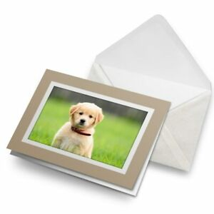 Greetings-Card-Biege-Cute-Labrador-Puppy-Dogs-Animals-Pets-8613
