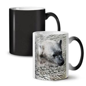 Beast Wild Animal Bear NEW Colour Changing Tea Coffee Mug 11 oz   Wellcoda