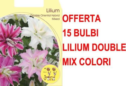 OFFERTA 15 BULBI LILIUM ORIENTAL A FIORE DOPPIO MIX DI COLORI BULBS