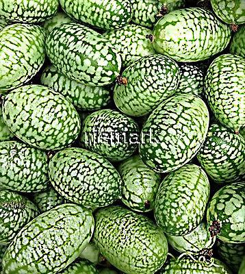 CUCAMELON  Minifrucht 1 cm,  ideal für  Balkon,  5 Gurken-Samen handverlesen