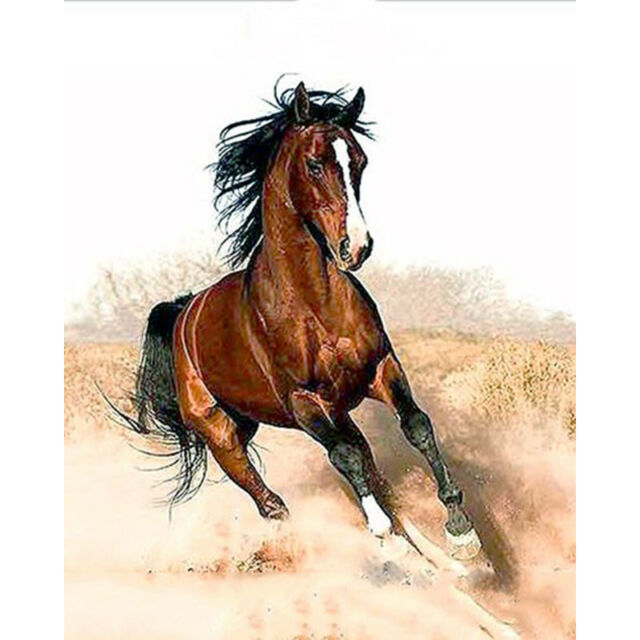 """Horse Animal - 16X20"""" Paint By Number Kit DIY Acrylic Painting on Canvas SPA1818"""