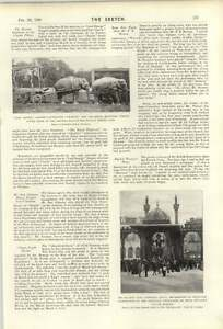 1900-Bugler-Dunne-Spanish-Dancer-Belle-Chavita-Sanger-039-s-Elephants