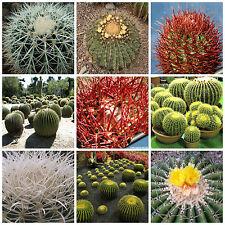 100 semi in miscuglio di Echinocactus mix ,piante grasse,seed cactus mix