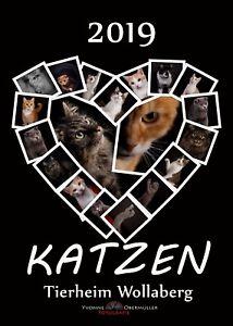 Kalender-2019-HOCH-Fotokalender-Katzen-Katzenkalender-DIN-A3-zu-Gunsten-Tierheim