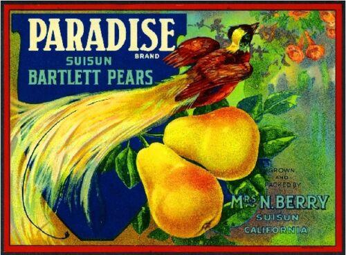 Suisun California Paradise Beautiful Bird Pear Fruit Crate Label Art Print