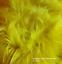 Sheepskin-rustic-stool-tabouret-hocker-sheepskin-Long-Wool-12-20cm-25-color thumbnail 14
