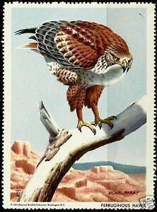 FERRUGINOUS-HAWK-NATIONAL-WILDLIFE-FEDERATION-CINDERELLA-1961-MNH