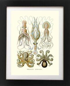 Antique OCTOPUS Squid Sea Life Ocean Nature Species Poster RP Fine Art Print