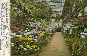 ETATS-UNIS-Chrysanthemum-Display-Horticultural-hall-PHILADELPHIA-Paillettes