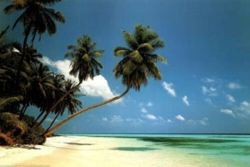 MALDIVE MORNING TROPICAL BEACH POSTER 24x36 OCEAN LANDSCAPE PALM TREE 2834