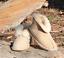 thumbnail 1 - Ladies-Ugg-Slippers-Merino-Sheepskin-Womens-Boots