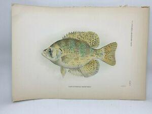 Original-Antique-Lithograph-1907-Hoen-Fish-of-NC-Print-Flier