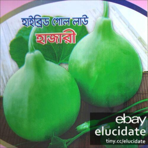 Dudhi 5x HAZARI Bottle gourd Bangladeshi Lao Lau Khodu seeds
