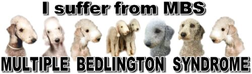 """/""""I Suffer from  MULTIPLE  BEDLINGTON  SYNDROME/"""" Dog Car Sticker by Starprint"""
