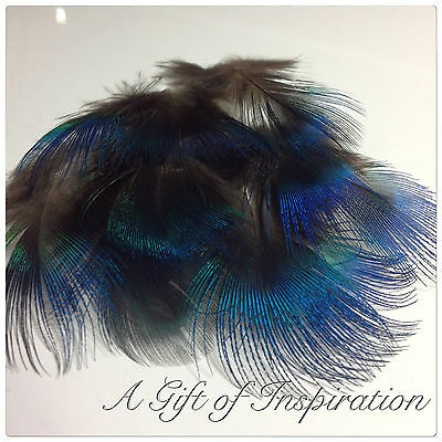 10 XL 4-7cm Natural Blue Peacock neck plumage feathers craft millinery jewelery