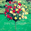 300 Pcs Seeds Mix-Color Rose Tree Flowers Bonsai Garden Potted Balcony NEW 2018