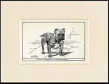 BULLDOG ANTIQUE 1900 WOOD BLOCK ENGRAVING NAMED CHAMPION DOG PRINT READY MOUNTED