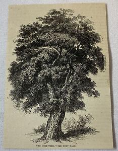 1877-magazine-engraving-THE-CORK-TREE