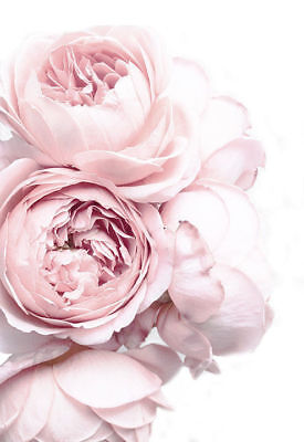 Pink Roses French Provincial Shabby Chic Flowers Country Canvas Print A3