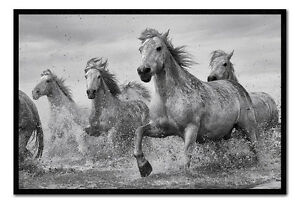 Camargue-Wild-Horses-Framed-Cork-Pin-Notice-Board-With-Pins