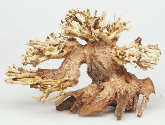 Bonsai Tree Freshwater Aquarium Aquascape Moss Driftwood 6 ...