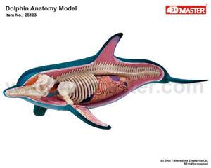 Modèle d'anatomie du dauphin 4d