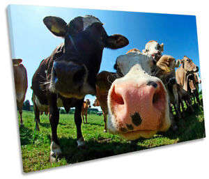 Funky Cow Face Farm Picture SINGLE CANVAS WALL ART Print