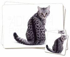 PLATA LUNAR gato atigrado Individual 2x Manteles + 2x Posavasos Juego