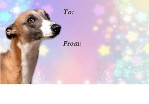 """/""""I Suffer from  MULTIPLE  WHIPPET  SYNDROME/"""" Dog Car Sticker by Starprint"""