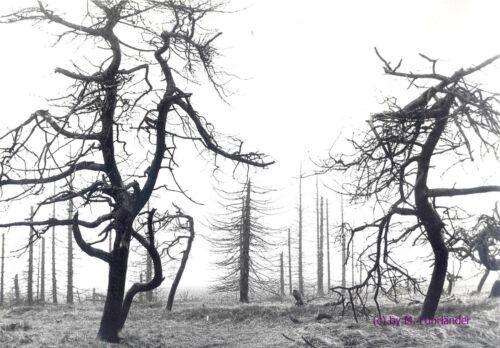Vintage,Großphoto,Arends-Brayer,Das stille Sterben 5 handschriftl.sign DIN A 4
