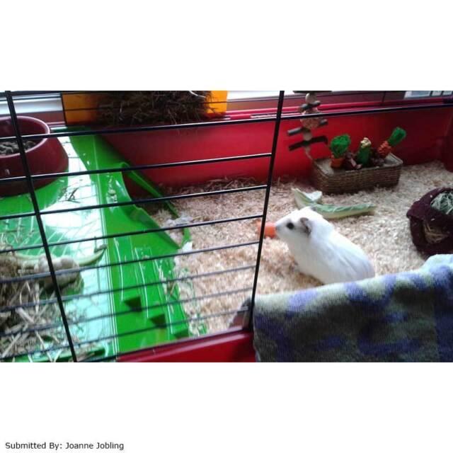Savic Nero 3 De Luxe Small Animal Cage W50 x D100 x H40cm