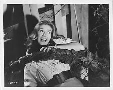 THE DAY OF THE TRIFFIDS original photo with press info on the back JANET MUNRO