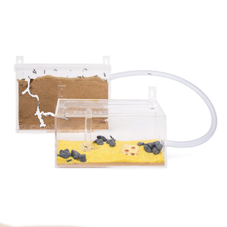 Se Ant agricoltura Wtutti Kit - formiautoium for LIVE ants