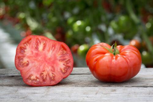 200 PINK PONDEROSA TOMATO Henderson/'s Lycopersicon Fruit Vegetable Seeds CombSH