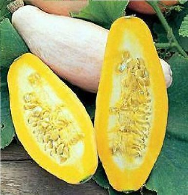Vegetable - Squash - Pink Banana - 10 Seeds