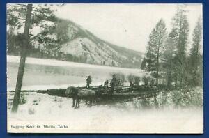 Logging-Scene-near-St-Maries-Idaho-id-pine-trees-river-1911-posted-postcard