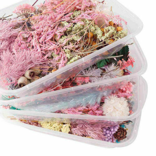 Mixed Color 3D Real Dried Flower Plants Pressed Flowers Making Craft DIY Decor