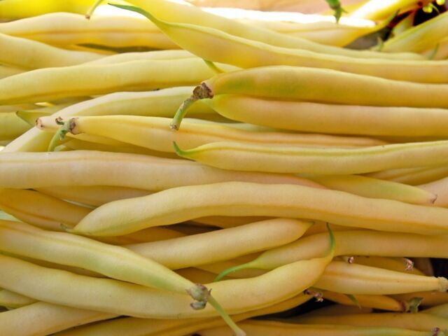 CLIMBING YELLOW BEAN - KENTUCKY WONDER WAX - 100 SEEDS