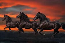 "Pferde Poster Herde am Abend ""Fantasy Horses"" mit Gratisposter"