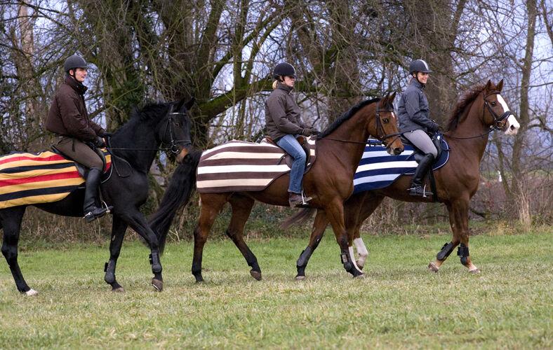 Horseware Rambo Newmarket Alfombra de lana de ejercicio de competencia Negro oro Azul Marino Choc