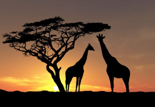 Home Wall Decor Artistic African Giraffe Oil Painting Picture Printed On Canvas